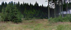 Les Aleje na Brtnicku, foto: Google Maps