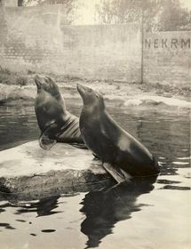 Držet nad vodou (Фото: Архив Пражского зоопарка)