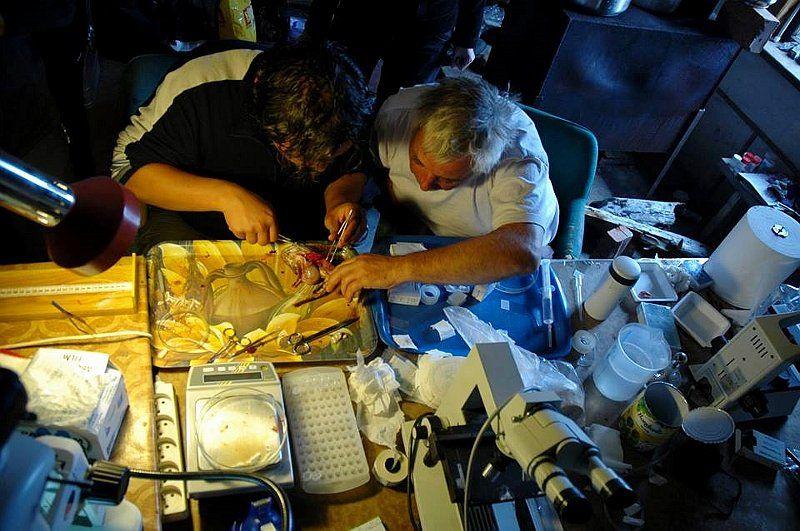 tschechische arktis forscher auf spitzbergen erhalten dauerhafte station radio prag. Black Bedroom Furniture Sets. Home Design Ideas