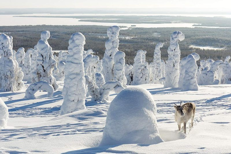 'Aïlo : Une odyssée en Laponie', photo: CinemArt