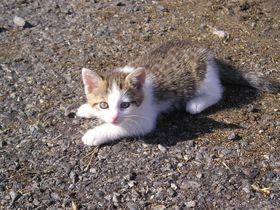 Kotě, foto: Barbora Kmentová