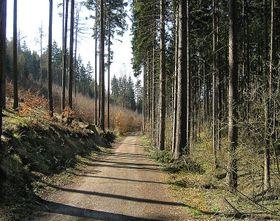 Кунратицкий лес, Фото: packa, CC BY-SA 2.5