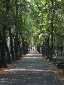 Olšany Cemetery, photo: Štěpánka Budková