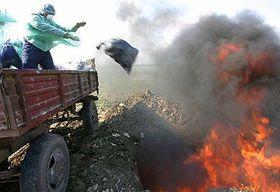 La gripe aviar en Rumania (Foto: CTK)
