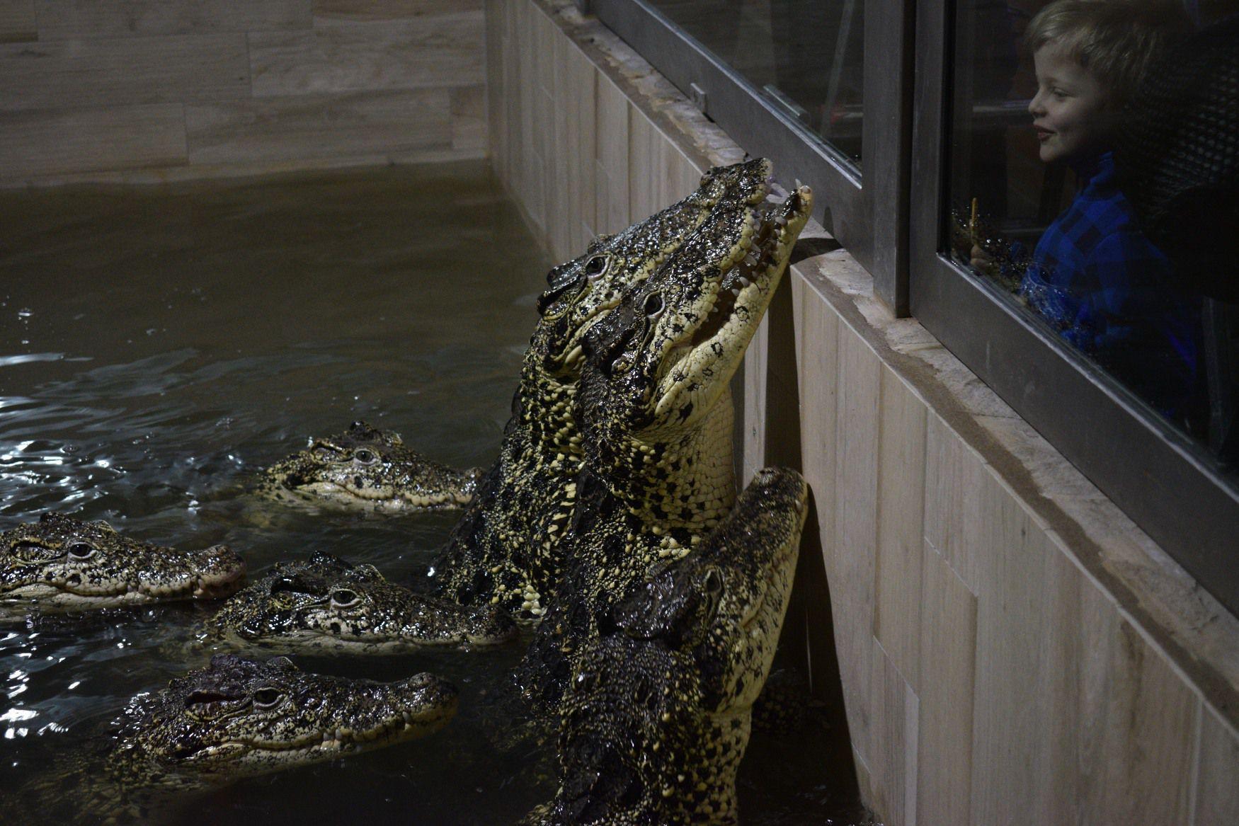 rádio krokodýl playlist
