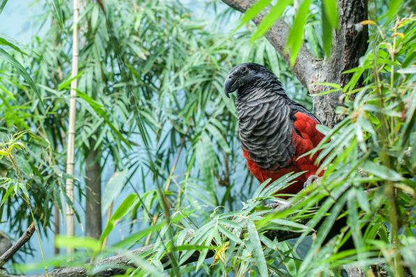 Borstenkopf (Foto: Petr Hamerník, Archiv des Prager Zoos)