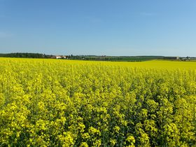 Rapeseed field, photo: Magdalena Kašubová