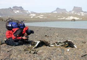 El objetivo principal de esta expedición consistió en estudiar la influencia de los cadáveres de las focas, foto: ČTK