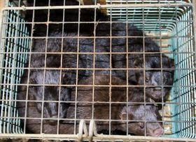 Photo: archive of the NGO Freedom for Animals