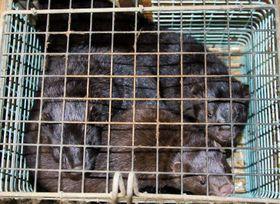 Fur farm, photo: Svoboda zvířat