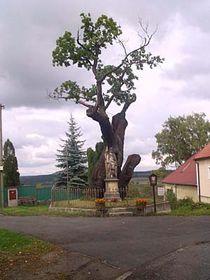 Stochovský dub, foto: Autor