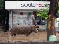 Le zoo de la ville a été dévasté et plusieurs animaux s'en sont échappés, photo: ČTK