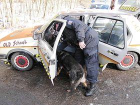 Perro adiestrado para buscar drogas, foto: Policie CR