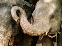 'Les Derniers Hommes éléphants', photo: Archives du festival Jeden svět