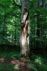 Жофинский лес, фото: Karelj, открытый источник
