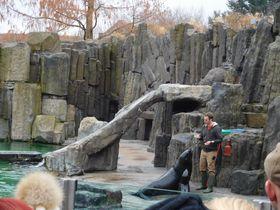 Представление с дрессированными морскими львами, фото: Лорета Вашкова
