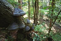 Wald im Duppauer Gebirge (Foto: Jaroslav Vojta)