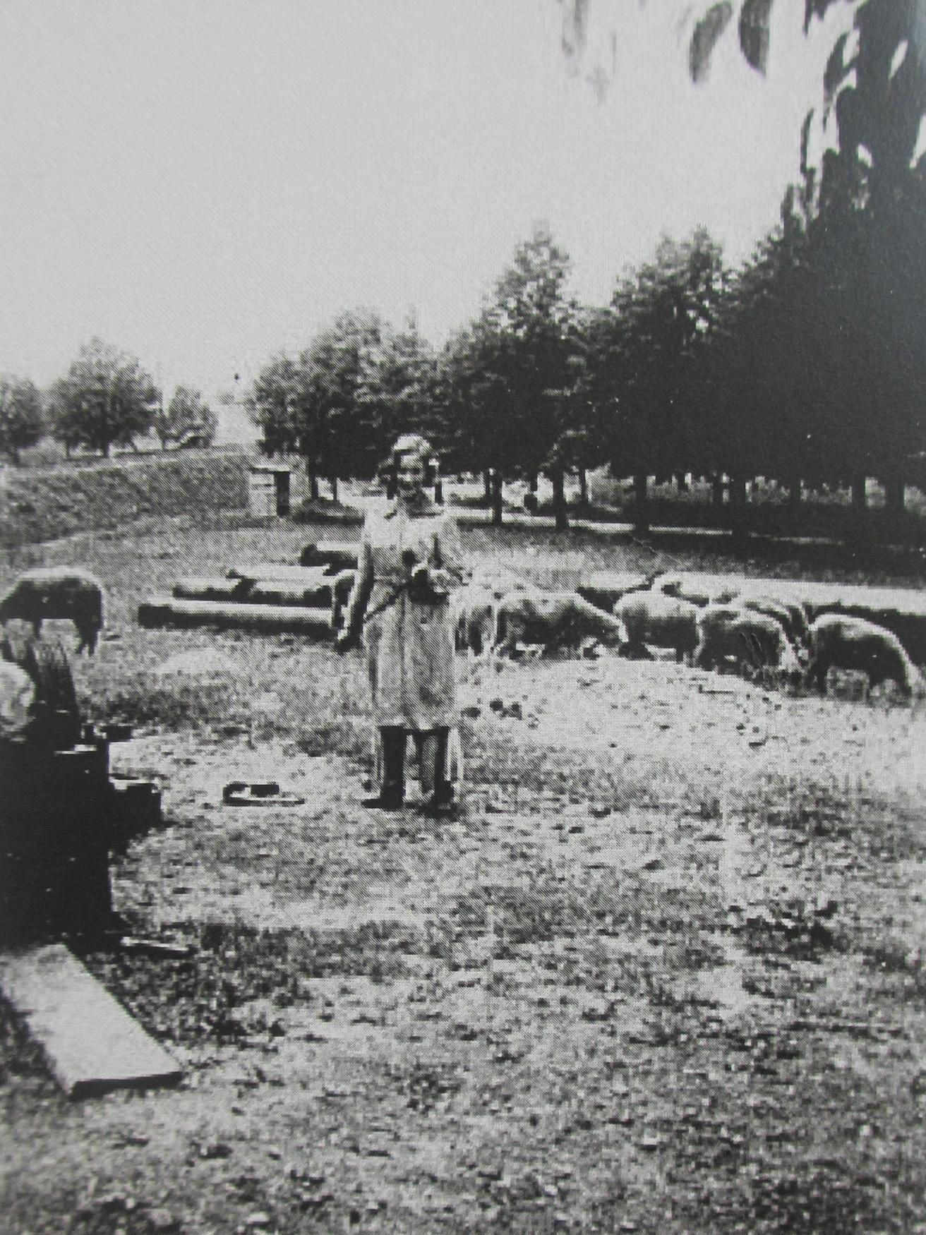 Doris Grozdanovičová: the girl with the sheep in Terezín | Radio Prague