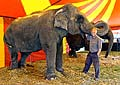 Elephant Duna who fell into the audience, photo: CTK