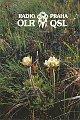QSL z roku 1992