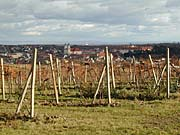 Weinberge in Valtice