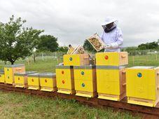 Včelaření v otevřené věznici v Jiřicích, foto: Filip Jandourek, ČRo
