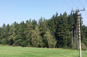 Wald bei Říčany (Foto: Filip Titlbach, Archiv des Tschechischen Rundfunks)
