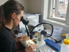 Studentka parazitologie Nikol Kmentová, foto: Romana Lehmannová