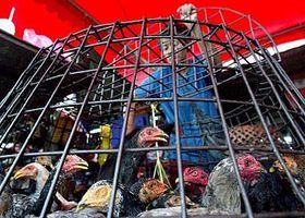 Prodavačka drůbeže na trhu vthajské metropoli Bangkoku, foto: ČTK