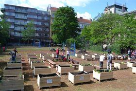 Коммунальный огород «Сметанка» в Праге 2, Фото: официальный сайт района Прага 2