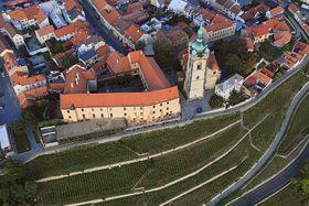 Виноград (Фото: Zdeněk Fiedler, CC BY 3.0 Unported)