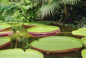 Victoria Regia, foto: El jardín botánico de Liberec