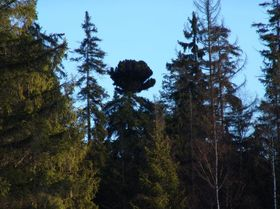 Bosque de Slavkov, foto: CHKO Slavkovský les