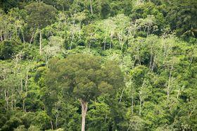El bosque Chiquitano, foto: Sam Beebe, CC BY 2.0