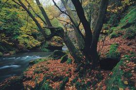 Kamenice, photo: National Park České Švýcarsko