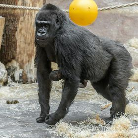 Фото: Архив Zoo Praha