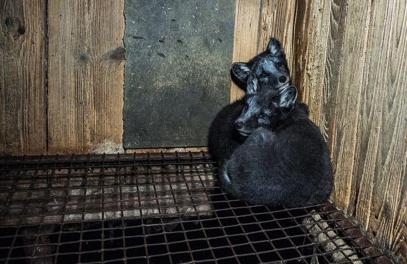 Foto: Obraz – obránci zvířat