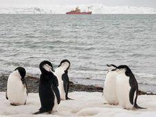 Foto: Offizielle Facebook-Seite der Polarforschung auf der Universität in Brünn