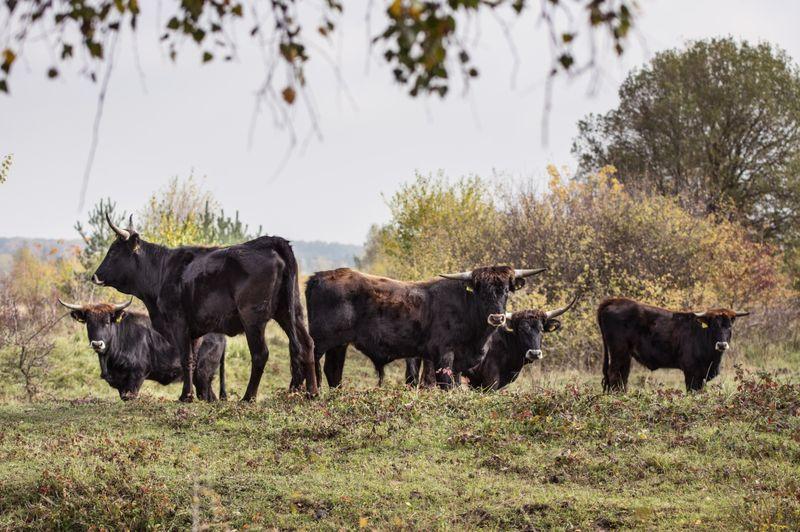 Foto: Michal Köpping / European Wildlife / Česká krajina