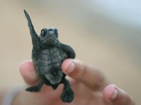 Je šťastný jako želva (Фото: Jose Assenco, Free Images)