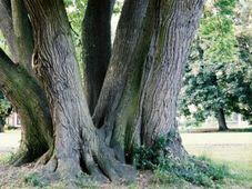 Strom roku 2004, foto: www.stromzivota.cz