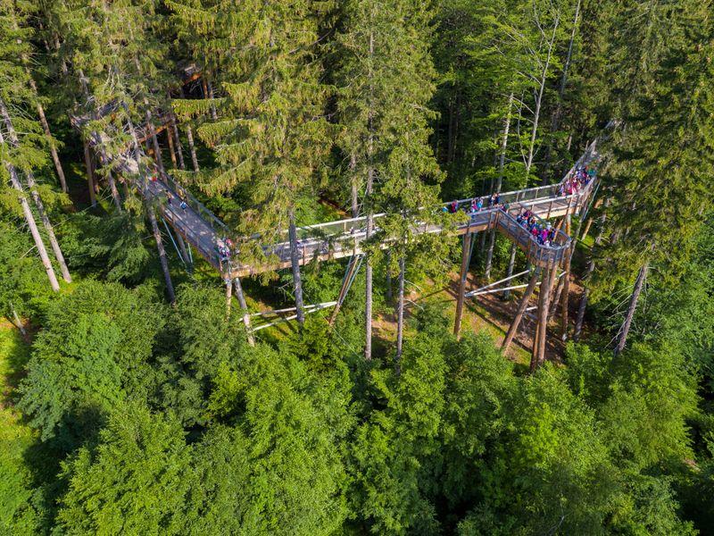Krkonošská stezka korunami stromů je vskutku monumentální, foto: Stezka korunami stromů Krkonoše