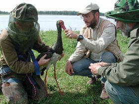 Чешская экспедиция в Сибири (Фото: ЧТК)