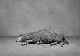 'Mouton', photo: Ivan Pinkava / Site officiel du centre de la photographie Stimultania