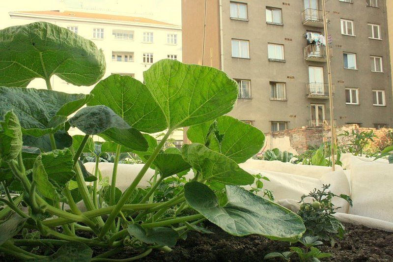 Urban Gardening Takes Root In Prague Radio Prague International