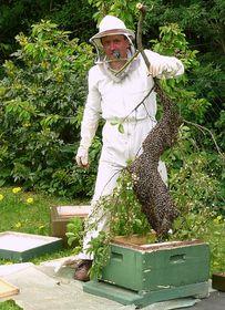 Bienenvater mit einem Bienenschwarm - včelař s rojem (Foto: Axel Hindemith, Wikimedia CC BY-SA 3.0)