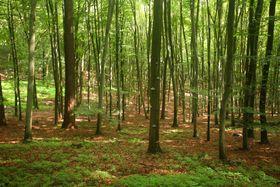 Wald - les - les, hora (Foto: Archiv des Tschechischen Rundfunks - Radio Prag)