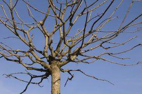 Die Äste sind nackt - holé větve (Foto: Birgit Förster, Pixabay / CC0)
