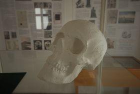 Гипсовая отливка черепа Махи в музей-квартире Карела Гинека Махи в городе Литомержице (Фото: Эва Туречкова, Чешское радио - Радио Прага)