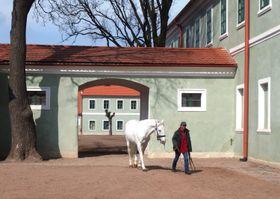 Pferdegestüt Kladruby (Foto: Palickap, Wikimedia Commons, CC BY-SA 4.0)
